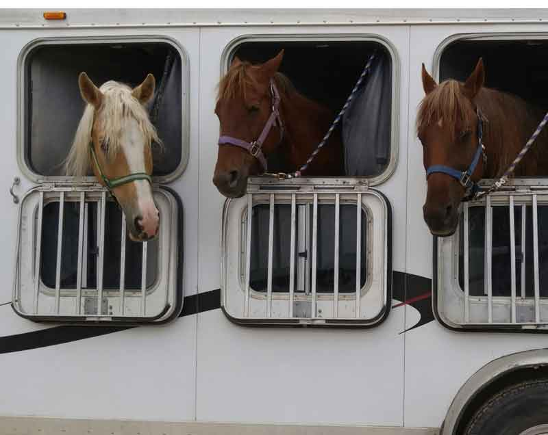Horse-Transport-plastic-sheet-transport-caravans-trailors